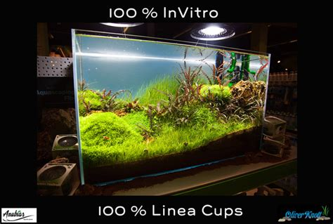 oliver knott aquascaping new 64 liter aquascape by oliver knott 100 linea cups