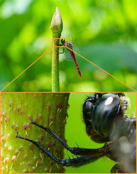 Sony 90mm F 2 8g Oss Macro G Lens sony fe 90mm f 2 8 macro g oss lens sle images at
