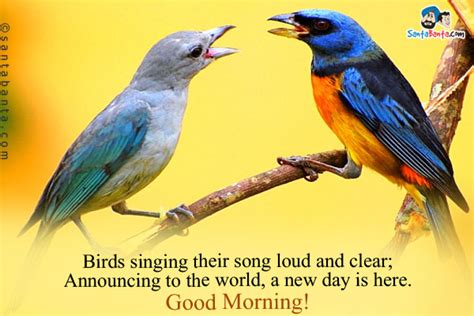 birds singing in the morning