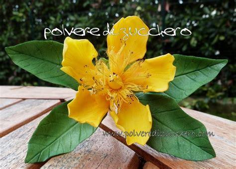 ipericum fiore 11 migliori immagini flower gum paste su pasta