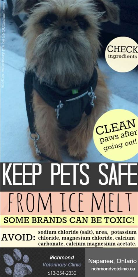 what to give a yorkie for upset stomach 52 best images about pet health pins by snout on