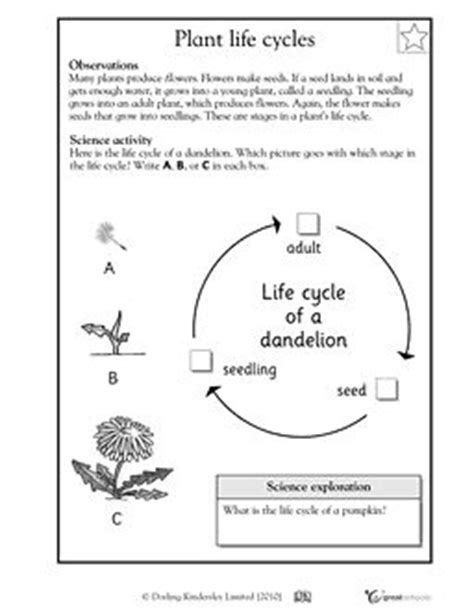 Plant Cycle Worksheet by Plant Cycles Science Unit Plant Cycle