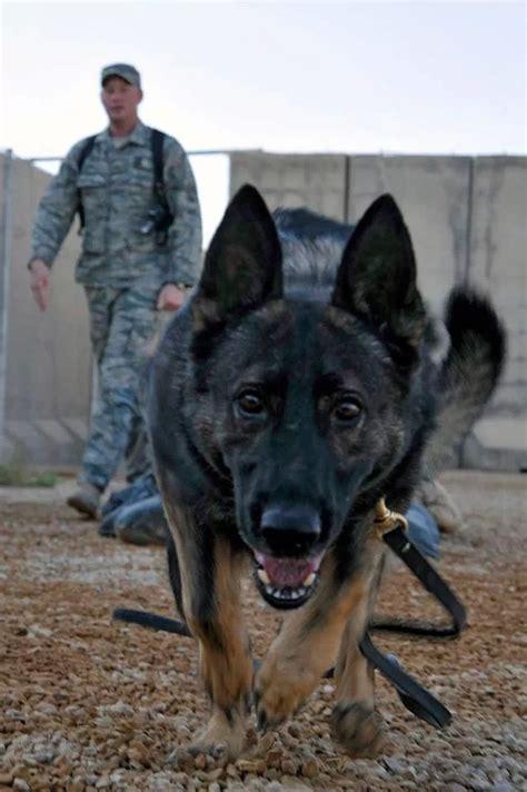 war dogs war war heros