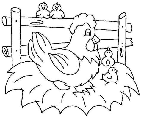 chicken coloring pages preschool free printable chicken coloring pages animal chicken