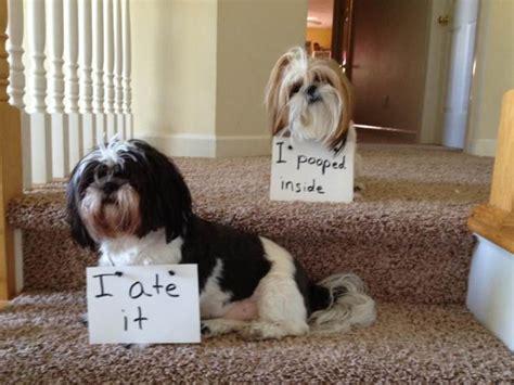 puppy shaming shaming