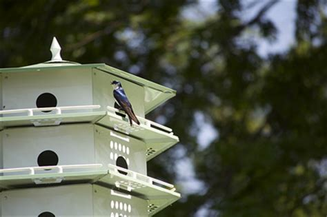 tree swallow house plans swallow bird house plans tree