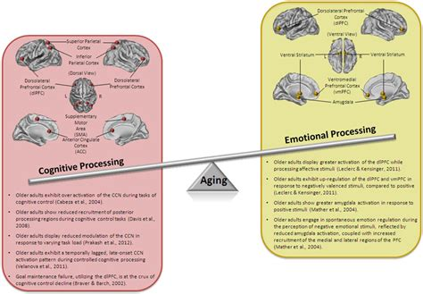 frontiers paradigm shift in dendritic frontiers mindfulness and the aging brain a proposed