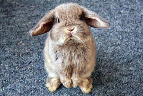 diarrea e alimentazione diarrea nel coniglio cause e rimedi per il coniglio con