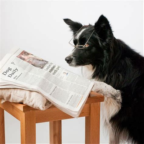 cutest puppies book 29 best images about dogs books on books and