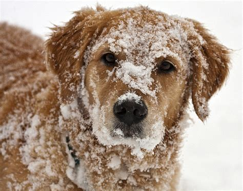 puppies in the snow dogs in the snow flickr photo