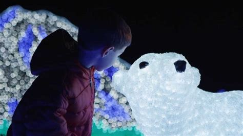 Point Defiance Zoo Lights Returns For The 29th Year Point Defiance Zoo Lights Hours