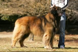 Leon berger doglers