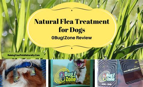 safe flea treatment for dogs best flea treatment for dogs reviews 0bug zone safe flea and tick prevention