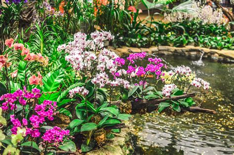 Orchid Garden by Colours Textures Of Changi Airport S Orchid Garden