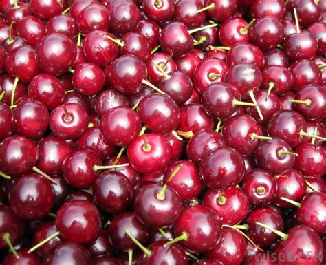 types of cherries pictures to pin on pinterest pinsdaddy
