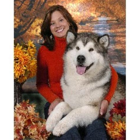 alaskan malamute puppies for sale in michigan pale moon kennels alaskan malamute breeder in howell michigan listing id 16164