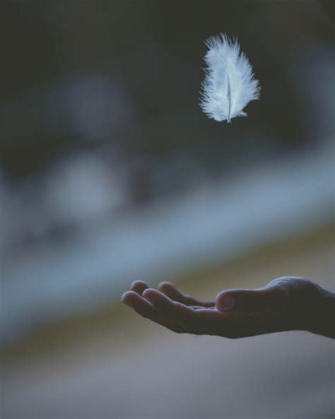 shallow focus photography  white feather dropping