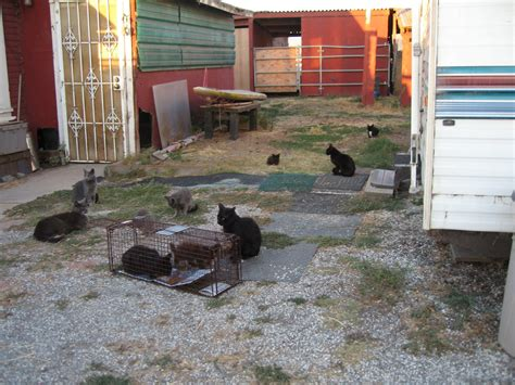 how to get rid of cats in backyard how to get rid of cats in backyard 28 images feral cat adoption and rescue guide