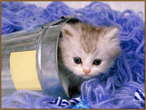 imagenes tiernas de amor para bb imagenes tiernas de gatitos bebes archivos gatitos tiernos