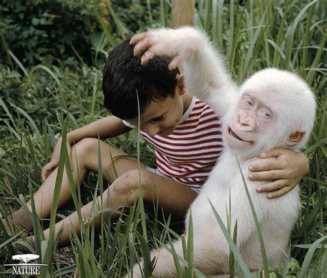 imagenes de animales albinos el po 233 tico albinismo en los animales fotos ecoosfera