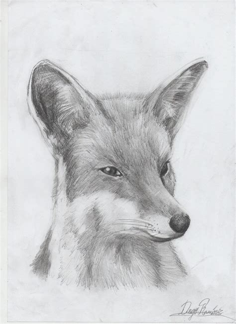 imagenes de zorros a lapiz algunos animales dibujos a lapiz taringa