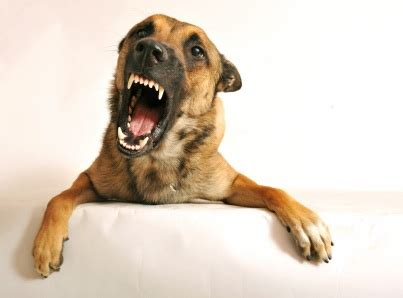 why does my dog bark at nothing in my house stop dog barking your guide to silencing barking dogs heart my dog