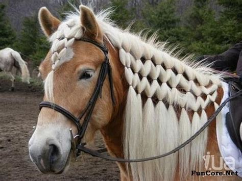 hairstyles for horses horse mane styles horses pinterest horse hair styles