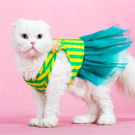 cat clothes cat dress cat princess wedding dress summer clothes cat