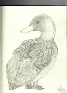 drake mallard drawing devin s duck by happyfeather on