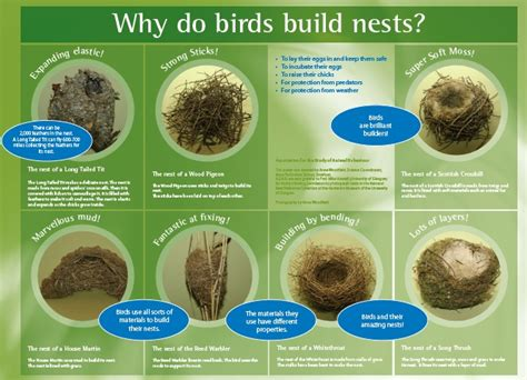 top 28 why do birds build nests lesson zone nz