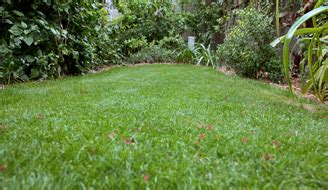 how to plant a zoysia grass lawn grass maintenance scotts