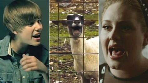 adele ft goat are you kidding me goats screaming in famous songs we