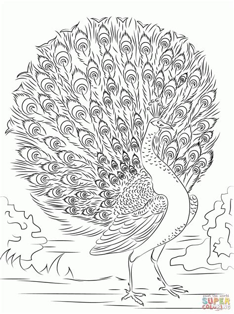 coloring pages for adults peacock peacock coloring pages for adults coloring home