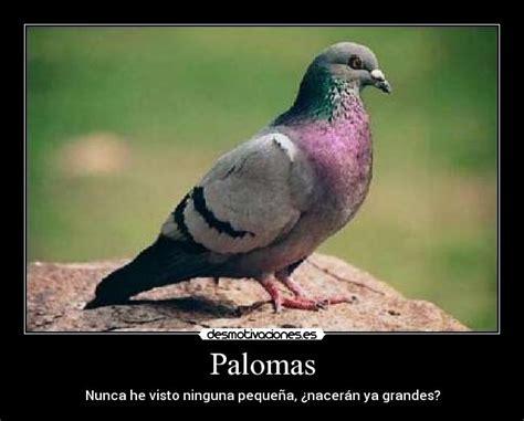imagenes de palomas ok palomas desmotivaciones
