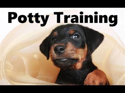german jagdterrier puppies for sale pinscher miniature funnydog tv