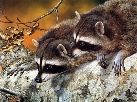 desktop wallpapers backgrounds animals wallpapers