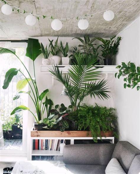 best living room plants best 25 living room plants ideas on pinterest plant