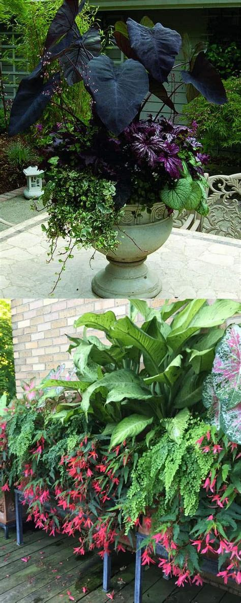 colorful shade plants 16 colorful shade garden pots and plant lists a of