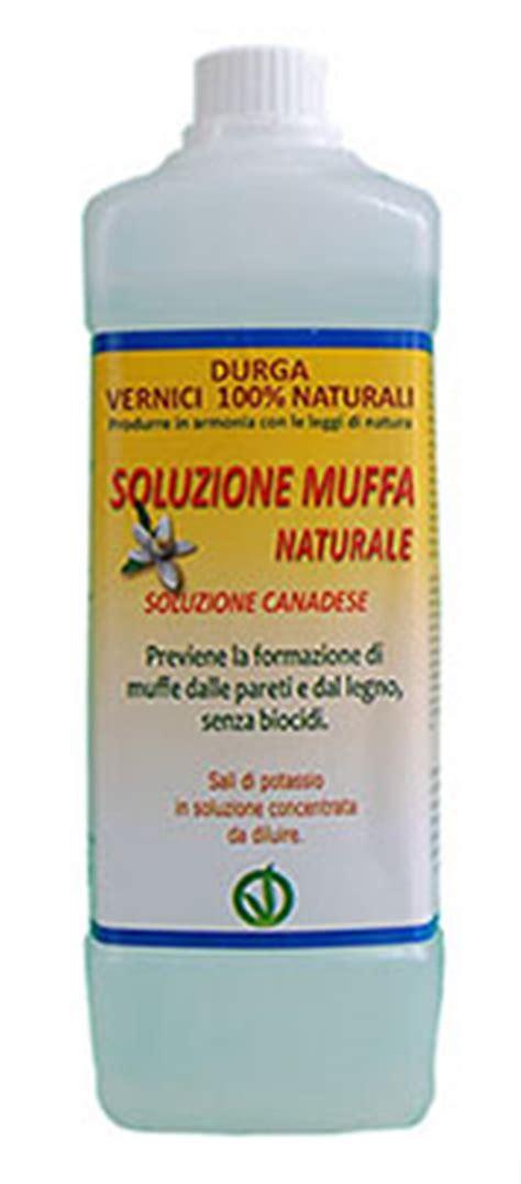muffa pareti interne soluzioni soluzione muffa naturale soluzione canadese