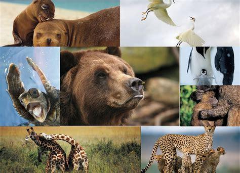 imagenes de animales nuevas especies c 225 lculo hist 243 rico viven en la tierra 8 700 00 especies