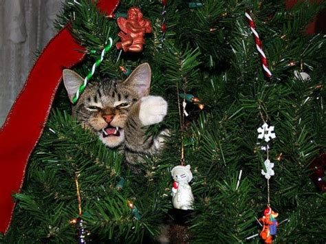 funny pictures of cats and christmas trees 1000 images about o tree o tree your ornaments are history on