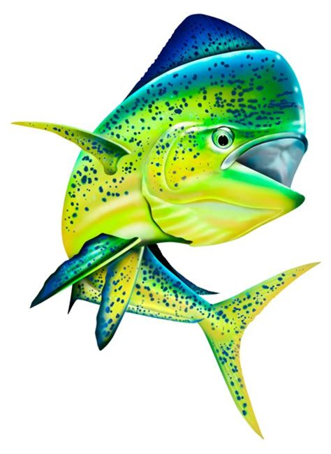 full color decals fishing decals mahi mahi color decal