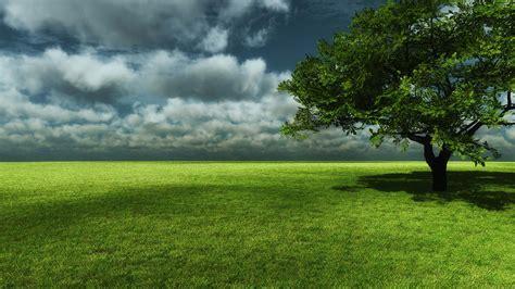 imagenes prados verdes fondo pantalla prado verde