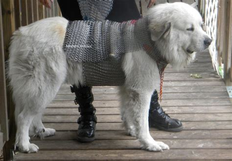 armour dogs chainmail protective armor class