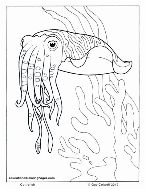 Marine Life Coloring Pages Az Coloring Pages Marine Coloring Pages