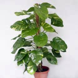 attractive Where To Keep Money Plant At Home #2: money-plant2.jpg
