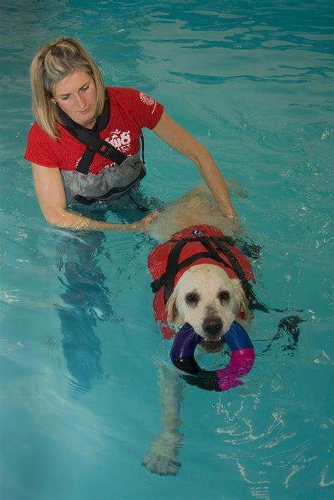 hydrotherapy for dogs hydrotherapy for dogs puppa