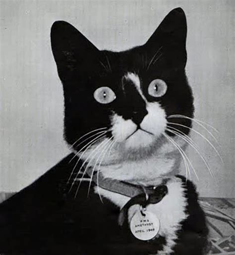 Iconic Cat Story meet the cat unsinkable sam