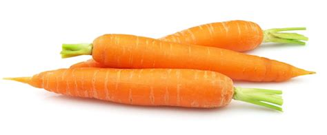 dogs eat carrots can dogs eat carrots can dogs eat this
