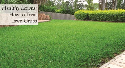 healthy lawns lawn grub treatment about the garden magazine about the garden magazine